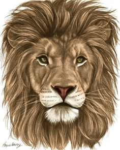 Lion, Pencil Drawing, Colored, Fine Art Print by Wendy Hogue Berry Animal Sketches, Animal Drawings, Pencil Drawings, Art Drawings, Drawing Animals, Lion Drawing, Painting & Drawing, Lion Sketch, Lion Wallpaper