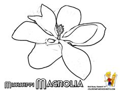 flower printables states maine montana free flower drawings flower coloring pagesmagnolia flowerflower drawingsmississippi