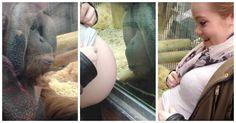 Este orangután se emociona cuando una mujer embarazada le revela que va a ser madre #viral