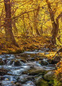 Mcgee Creek by tassanee.deviantart.com on @deviantART