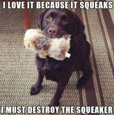Funny Animal Pictures Of The Day - 15 Pics