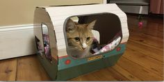What a cutie! Adult cat happy sitting in his kitty camper. The ultimate cat trailer and cat caravan. Available on the website and on Amazon.com and Amazon.co.uk