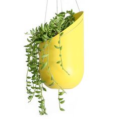 Hanging Planter Yellow  by Wallter