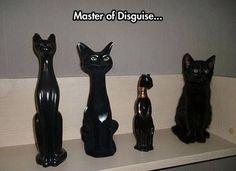 30 Funniest Cat Memes #Funny Cats #cat memes More