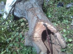 At Northern Beaches Tree & Garden Services, we are specialized in removing small to large trees from any locations, including constraint places in urban areas.