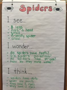 Kindergarten spider inquiry. I see, I wonder, I think.