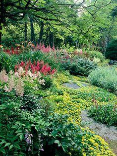 Beautiful shade gard Beautiful gorgeous pretty flowers UNCOMMON