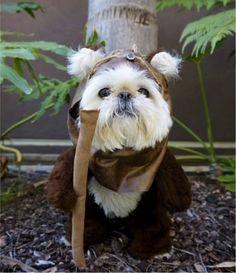 Ewok dog costume... #StarWars #Halloween
