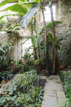 Garden Of The Week: Aberglasney - The English Garden Tropical Landscaping, Tropical Plants, Backyard Ideas, Garden Ideas, Guava Tree, Jungle Gardens, Source Of Inspiration, Fairy Houses, Balcony Garden