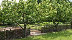 Æbletræer på Frederiksdal
