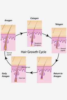 How To Make Your Hair Grow Faster - The Science Behind Hair Growth