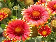 1000 images about best flowers in the world birthday flowers on