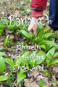 Was gibt es im Garten im April zu tun? Im Frühling steht eine Menge Gartenarbeit an. Sorge jetzt vor, damit du im Herbst und Winter Gemüse aus deinem Garten ernten kannst. Gurken, Zucchini und Kürbisse werden jetzt gesät. Nutze das vitaminreiche Unkraut, um deine Salate aufzupeppen oder eine leckere Kräuterbutter zu machen. #gartenarbeit #biogarten #gemüsegarten #nachhaltig Cinema Architecture, How To Plan, Zucchini, Instagram, Winter, Monat, Avocado, Gardening, Pictures