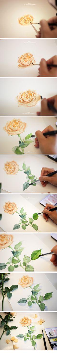 之前画的一些植物,再分享一下常用的画具~♡-李淡淡_插画,水彩,原创_涂鸦王国插画