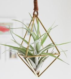 Himmeli Diamond Air Plant Ornament by Handmade SamMade on Scoutmob Shoppe