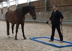 how to teach your human to stand in a puddle....The horse refuses to go into water - no matter what.