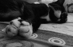 #Luna#cat#still#hungry#kitty#LOL