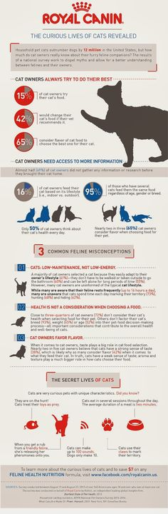 The Curious Lives Of Cats Revealed    #Infographic #Cat #Pets
