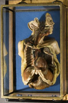 Joseph Towne (1808-1879) showed extraordinary skill in making wax anatomical models and was appointed modeller to Guy's Hospital and Medical School. This dissection shows the complex connections between the heart and brain, including those of the circulatory and nervous systems.