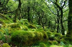 Wistman's Wood, Devon England