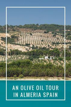 Looking for a great Olive Oil Tour in Almeria, Spain?  via @https://www.pinterest.com/xyuandbeyond/