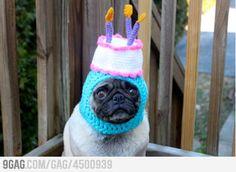 Saddest Birthday Pug Ever