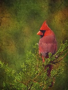 cardinal remember seeing many of these when out horseback riding  near Scottsdale AZ