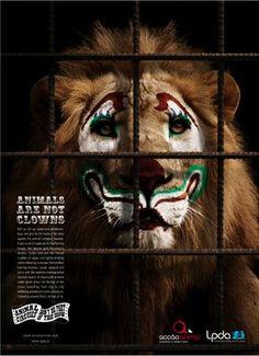 León circo