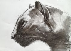 Charcoal drawing of a black panther by Marianne Rijvers 2012
