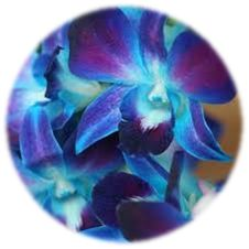I know I want orchids this color...but I seriously can't figure out where to find them