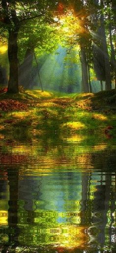 Streaming rays of sunrise in the forest
