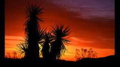 Sunrise in Yucca Valley.