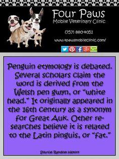 Penguin Fact Panda Facts, Penguin Facts, Synonyms For Great, Wild Panda, Pygmy Marmoset, New World Monkey, Small Monkey