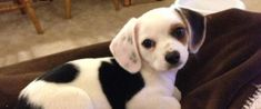 These 19 Adorably Awkward Mixed Breed Dogs Will Make You Love Mutts Even More
