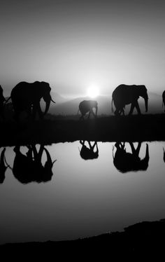 Reflective stroll