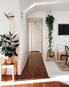 Home Inspiration: Explore Hanging Plants, Rubber Plant, and more!