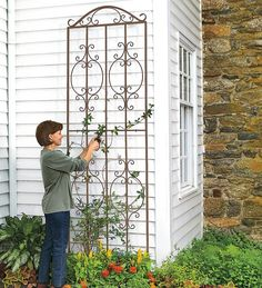 "Burnished Bronze Finished Iron Montebello Tall Trellis  32""w x 109"" h"