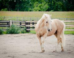 Horse Photography Horse Art Photo by on Etsy Horse Photography, Horse Art, Horses, Etsy, Animals, Animais, Animales, Animaux, Equine Art
