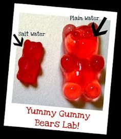 Science experiment with Gummy Bears! Great science experiment with kids. Kid Science, Kindergarten Science, Middle School Science, Science Classroom, Science Lessons, Science Education, Teaching Science, Science Activities, Science Ideas