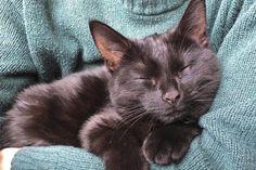 Superstições com gatos: conheça as crenças que envolvem os felinos