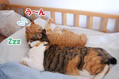 急接近?! - http://iyaiyahajimeru.jp/cat/archives/53675