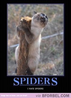When I See A Spider…or a June Bug or Scorpion or anything in the insect family.