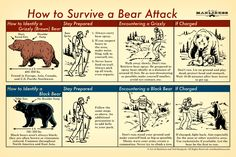 Best bushcraft skills that all survival lovers will certainly want to learn today. This is essentials for wilderness survival and will certainly save your life. Survival Life Hacks, Survival Food, Camping Survival, Outdoor Survival, Survival Prepping, Emergency Preparedness, Survival Skills, Survival Quotes, Survival Weapons