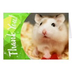 Shop Hammyville - Cute Hamster Thank You created by HammyVille. Personalize it with photos & text or purchase as is! Japanese Hamster, Roborovski Hamster, Hamster Names, Cute Hamsters, Small Animals, Pet Rabbit, Custom Greeting Cards, Dog Cat, Pets