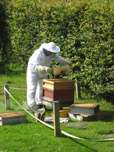 Checking the hives, July 2011