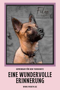Leiden, Ursula, Portrait, Pitbulls, Movie Posters, Sketch, Rest, Dog, Cute Photos