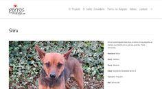 Shira, perro en adopción en Málaga