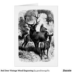 Red Deer Vintage Wood Engraving Greeting Card
