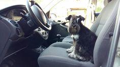 Eirian-Alberta-Zoe ich will Auto fahren.