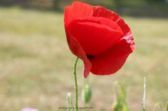 Der Stillzwerg - flowers